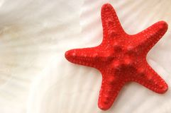 Starfish on seashells Stock Images