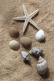 Starfish and Seashells. On the sand Royalty Free Stock Photos