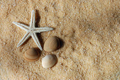 Starfish and Seashells. On the golden sand in sunlight Stock Images