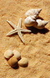 Starfish and Seashells. On the golden sand in sunlight Royalty Free Stock Image