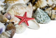 Starfish and seashells. On white with a lot of copy space Stock Image