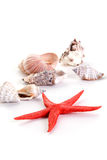 Starfish and seashells Royalty Free Stock Photos