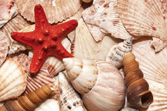 Starfish on seashells background. Details of redstarfish with seashells Royalty Free Stock Photo