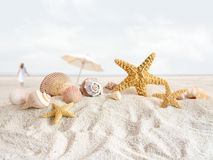 Starfish and seashells  at the beach Royalty Free Stock Image