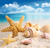 Starfish and seashells on the beach royalty free stock photos