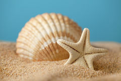 Starfish and seashells on beach Stock Images