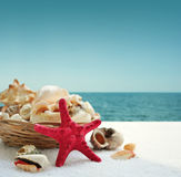 Starfish and seashells Royalty Free Stock Images