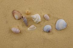 Starfish and seashells on beach sand Stock Image