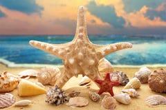 Starfish and seashells on the beach. Starfish and seashells on the sandy beach at ocean background Royalty Free Stock Photography