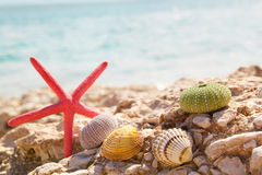 Starfish seashells beach summer background Royalty Free Stock Images