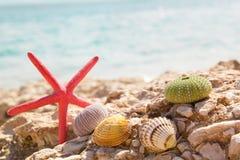 Starfish seashells beach summer background Royalty Free Stock Images