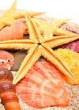 Starfish, seashells and  cockleshells on the sand Royalty Free Stock Photography