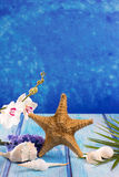 Starfish seashells with hyacinth flower and white orchid Stock Image