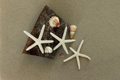 Starfish and seashells Royalty Free Stock Image