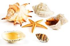 Starfish, Seashells, Miesmuschel lizenzfreie stockfotos