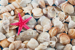 Starfish on seashells and oisters Royalty Free Stock Images