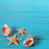 Beach seashore blue wood background seashells starfish square format stock images