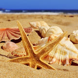 Starfish and seashells on the sand of a beach. Closeup of a starfish and a pile of seashells on the sand of a beach Stock Image