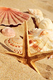Starfish and seashells on the sand of a beach. Closeup of a starfish and some seashells on the sand of a beach royalty free stock photos
