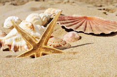 Starfish and seashells on the sand of a beach. Closeup of a starfish and some seashells and conches on the sand of a beach stock photography