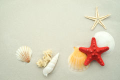 Starfish and Seashells. On sand with copy space Stock Image