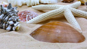 Starfish and Seashells on Sand stock video footage