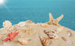 Starfish and seashells on the sandy beach Stock Photo