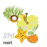 Starfish, seashells, sea stones and palm leaves . Baner for spa, hotel, card Stock Images