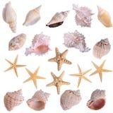 Starfish seashells shellfish set. Isolated on white background Royalty Free Stock Images