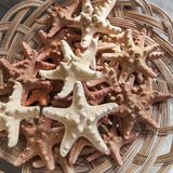 Starfish and seashells souvenirs for sale Stock Photos