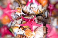 Starfish and seashells souvenirs for sale Royalty Free Stock Photos