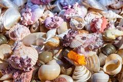 Starfish and seashells souvenirs Royalty Free Stock Image