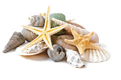 Starfish, seashells and stones Stock Photography