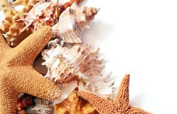 Starfish. And seashells together roasting in the sun stock photography