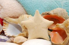 Starfish and seashells on towel background Royalty Free Stock Image