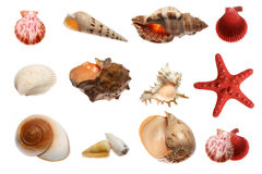 Starfish and seashells  on white Stock Images