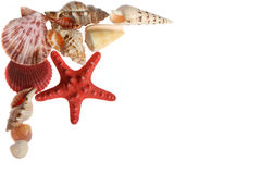 Starfish and seashells  on white. Background Royalty Free Stock Photos