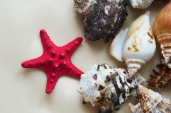 Starfish and seashells on white background. stock photo
