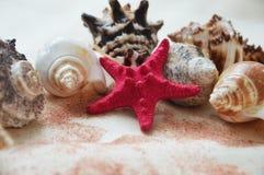 Starfish and seashells on white background. stock photos