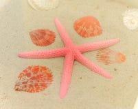 Starfish and seashells on white sand Royalty Free Stock Photo