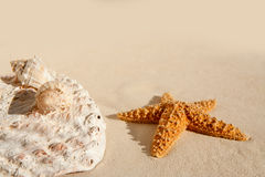 Starfish and seashells on white sand beach Royalty Free Stock Images