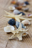 Starfish and seashells Royalty Free Stock Photography
