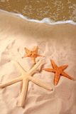 Starfish on Seashore Stock Images