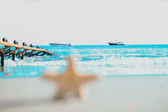 Starfish at the seashore Royalty Free Stock Photos