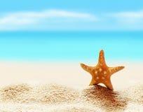 Starfish on the seashore Royalty Free Stock Image