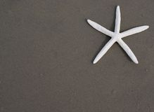 Starfish (seastar) royalty free stock images