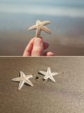 Starfish set Stock Images