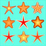 Starfish, a set of nine options Royalty Free Stock Image