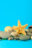 Starfish and set of objects of the sea underwater Royalty Free Stock Photos