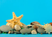 Starfish and set of objects of the sea underwater Stock Image
